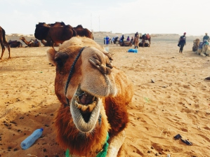 My camel, Dude