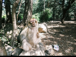 Our new friend in Azrou