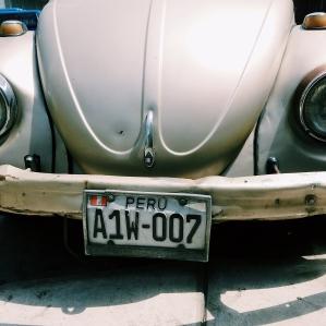 Bug in Miraflores