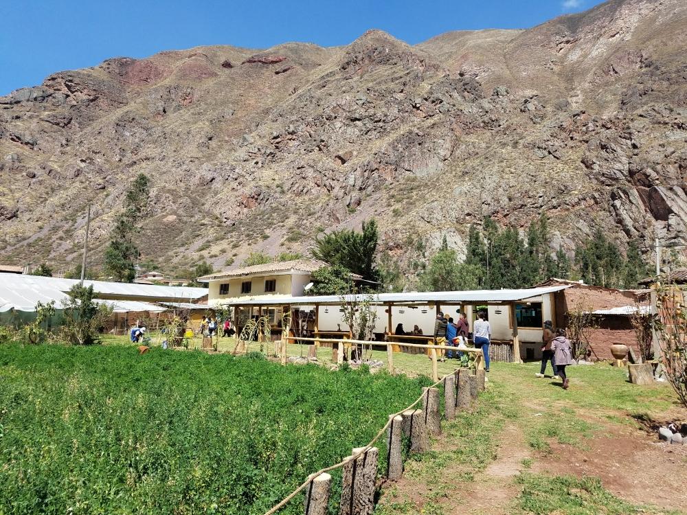 Urubamba cuy farm